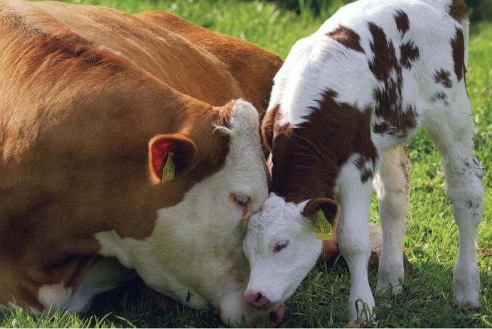 why cruelty free