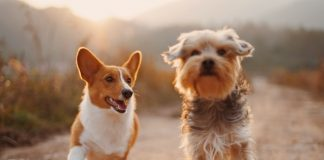 Vegan Pet Food – A Simple Buying Guide