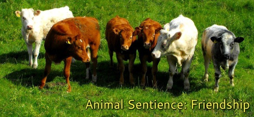 Animal Sentience Your Ultimate Guide