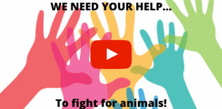 fight for animals